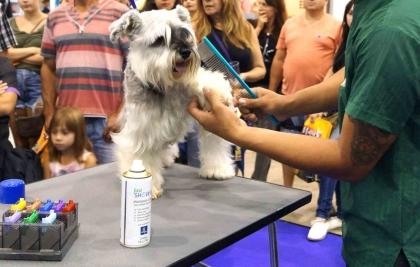 Feira de Adoção, Passarela Pet e Arena Pet  são algumas da atrações de feira em Curitiba neste final de semana